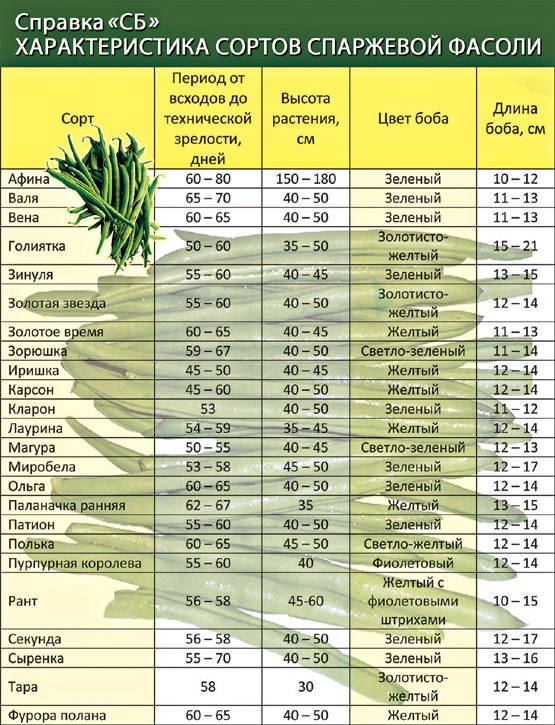 Как хранить фасоль спаржевую фасоль