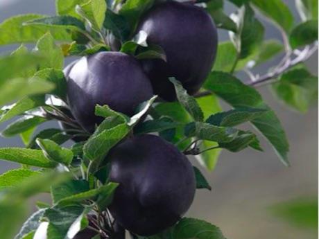черные алмазные яблоки