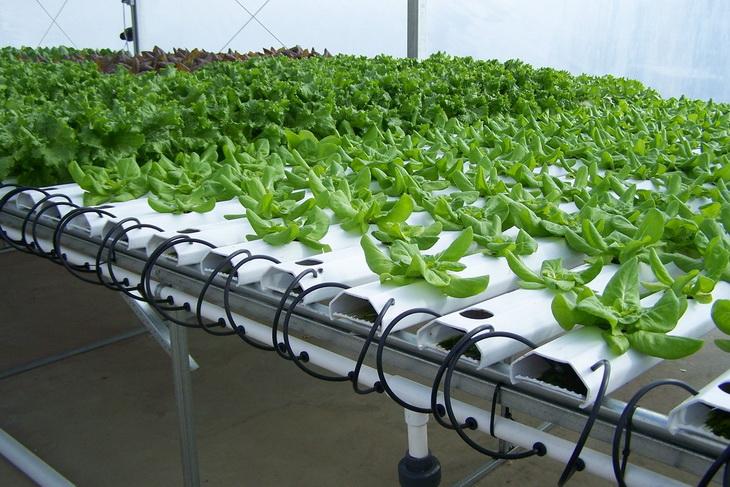 Бизнес на выращивании микрозелени своими руками в домашних 63