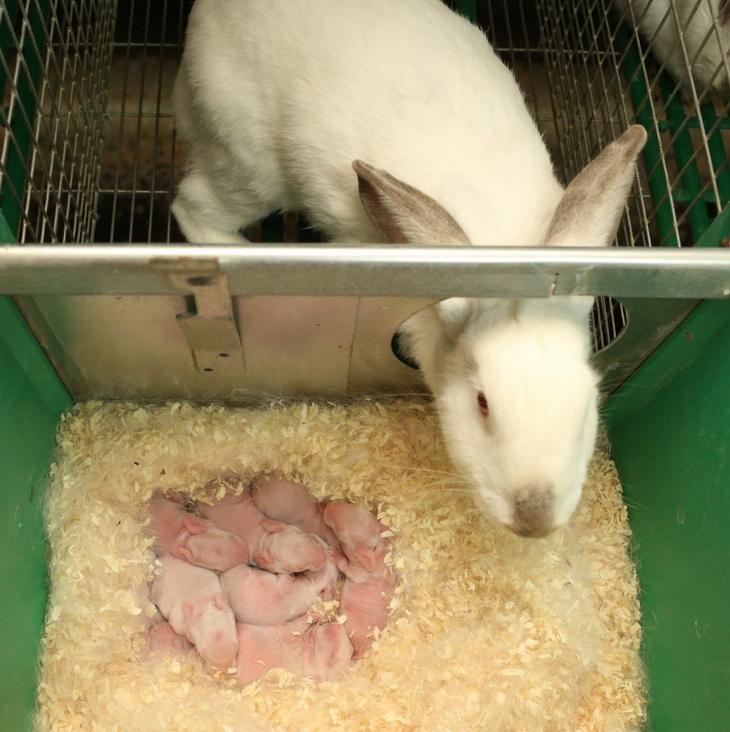 Справочник кролиководства