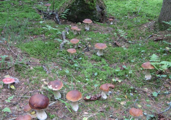 Сажать во сне гриб 569