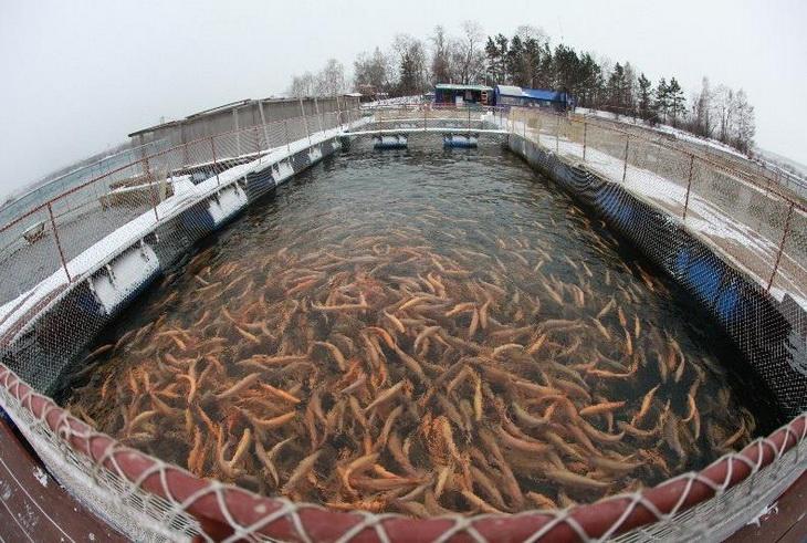 Рыборазводное хозяйство