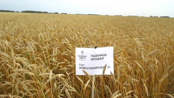 Доска объявлений пшеница газета синдика дать объявление