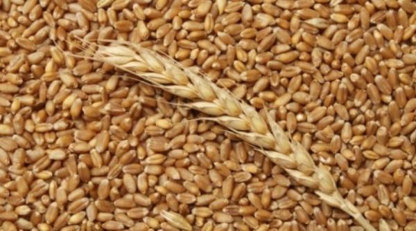 Доска объявлений по пшеницы ук дать объявление в калаче воронежской области