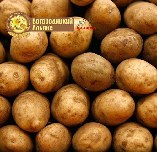 Доска объявлений, семенной картофель куплю продам подать объявления