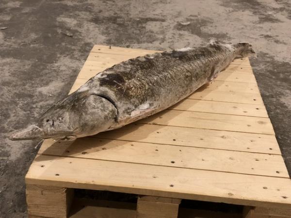Разместить объявление бесплатно рыба россия подать объявление о продаже недвижимости бесплатно без регистрации нижний новгород