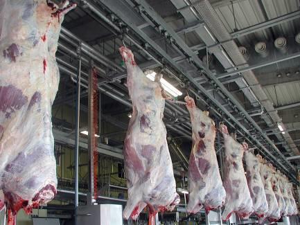 его словам, крупный рогатого скота мясо апоцет известна цена