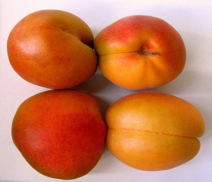 боярин абрикосы