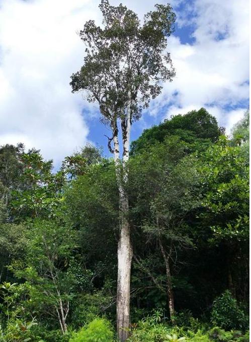 дерево из никеля