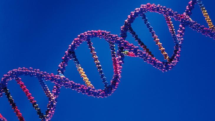 цепочка ДНК