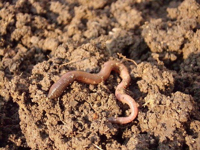 как добиться здоровой почвы