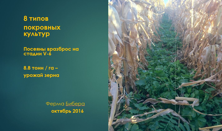 ферма бибера кукуруза