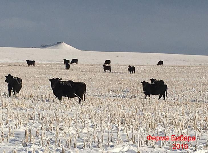ферма Бибера животноводство