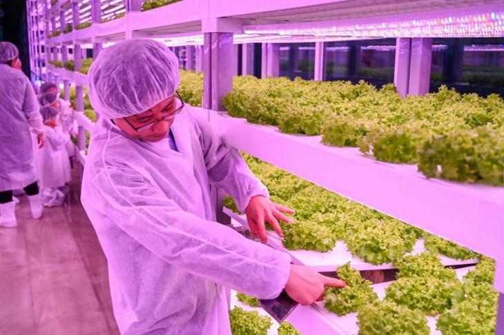 ферма в Южной Корее
