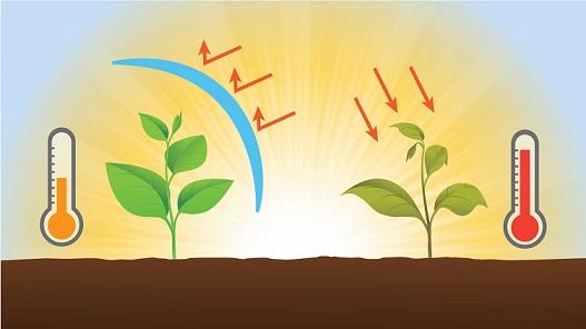Картинки по запросу солнечные ожоги растений