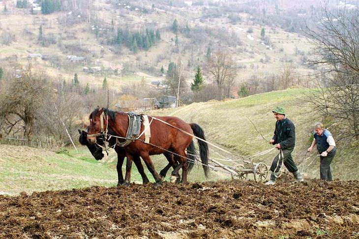 Новый закон «О развитии сельского хозяйства» в Якутии должен заменить пятнадцать старых законодательных актов