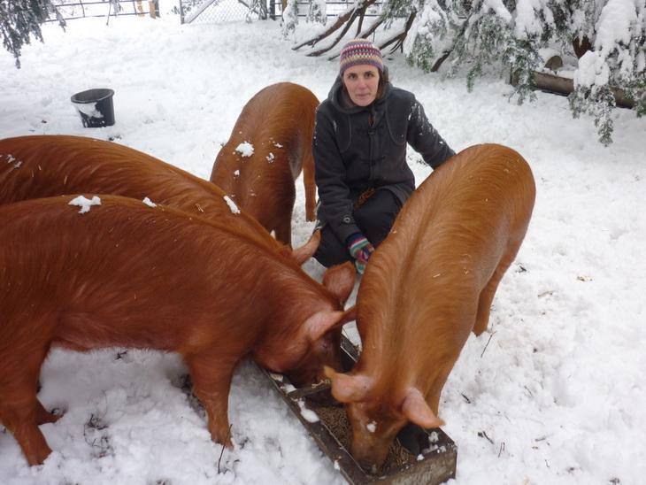 интерес порода рыжих свиней фото заменяемых стекол вырез