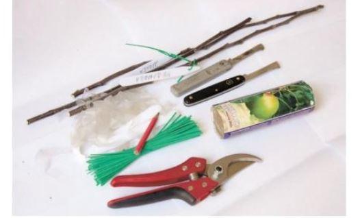 инструменты для прививки