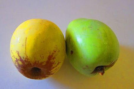 яблоки камуес