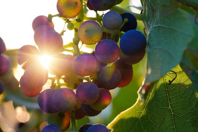 как хранить виноград зимой