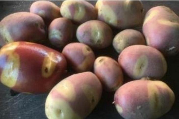 картофель Праздник