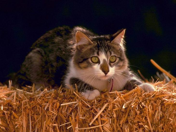 котенок на сене