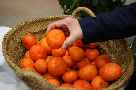 новые сорта мандаринов