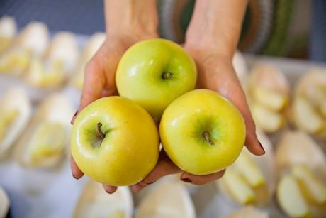 сорт яблок шинано голд