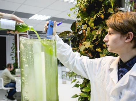 очиститель воздуха из водорослей