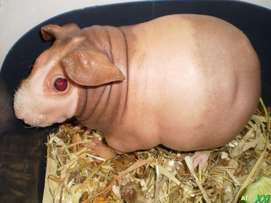 zhirnie-i-golie-babi