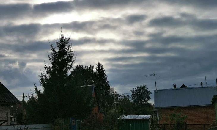 Как укрыть деревья и кустарники на зиму – 5 важных моментов завершения сезона — AgroXXI