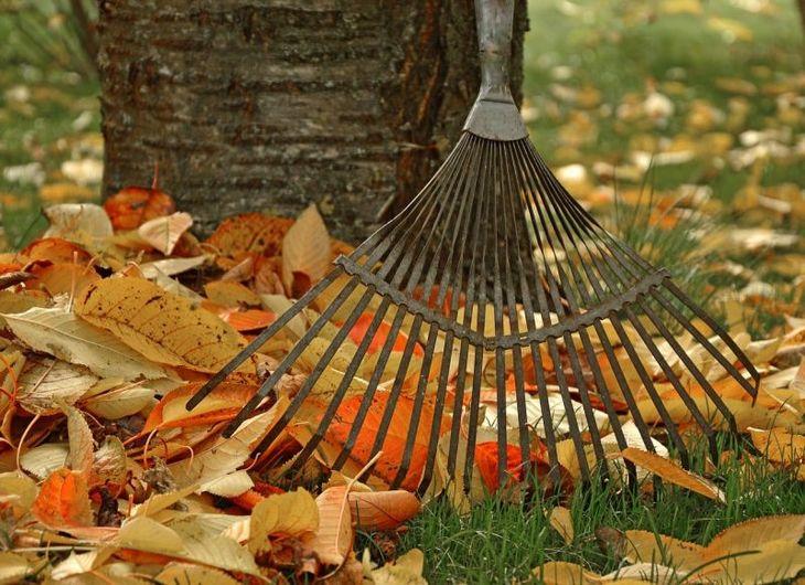 желтые листья осень уборка