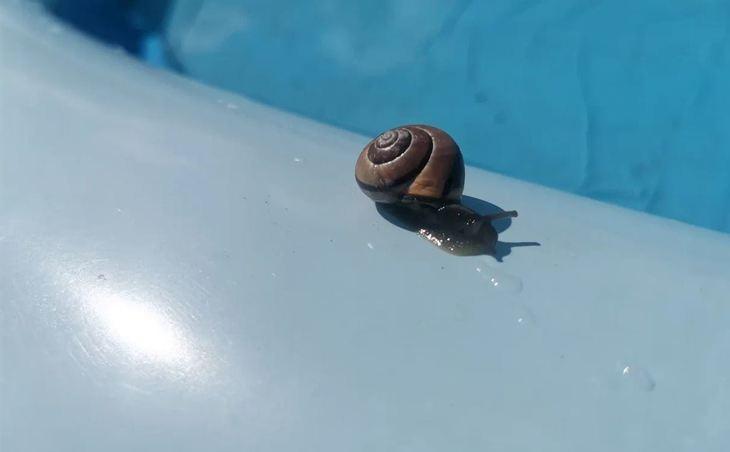 яйца скорлупа
