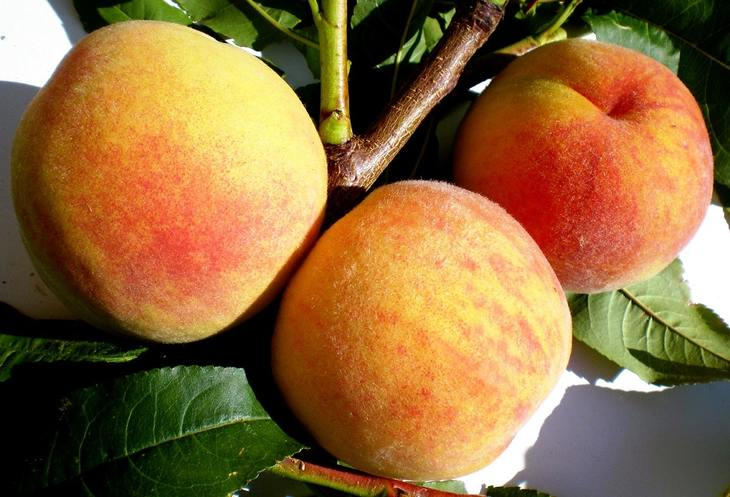 Новые сорта абрикосов и персиков селекции НБС превосходят зарубежные аналоги - фото