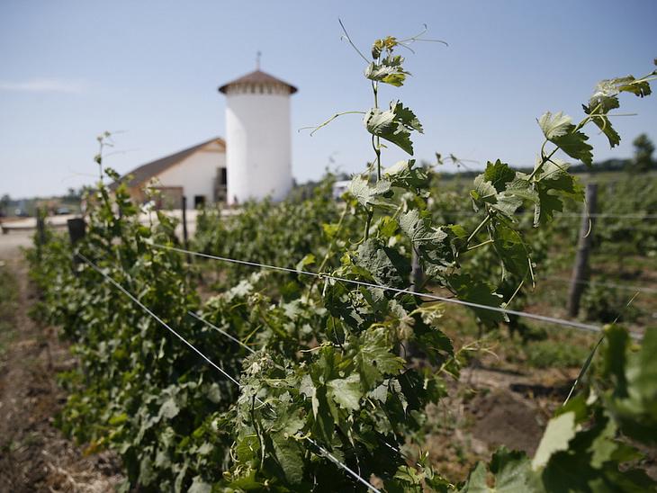 В результате прошедшего на Кубани циклона потери урожая винограда могут составить порядка 30 тысяч тонн