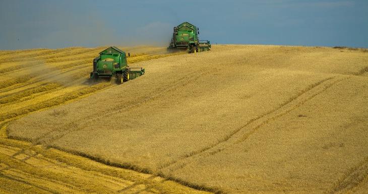 В Германии планируют собрать 42,4 млн тонн урожая зерна