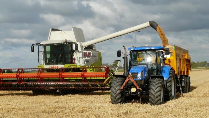 В Европе впервые проведут полевые испытания генно-модифицированной пшеницы