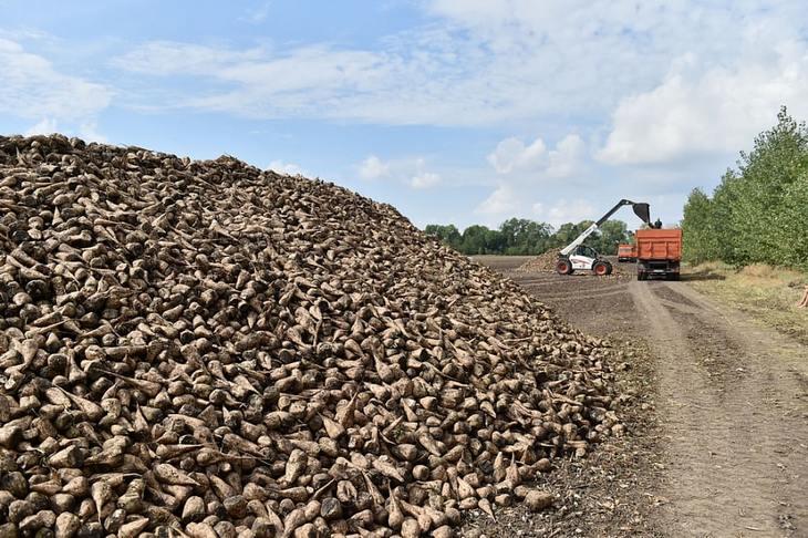 Первый миллион сахарной свеклы из запланированных 9-ти у Краснодарского края
