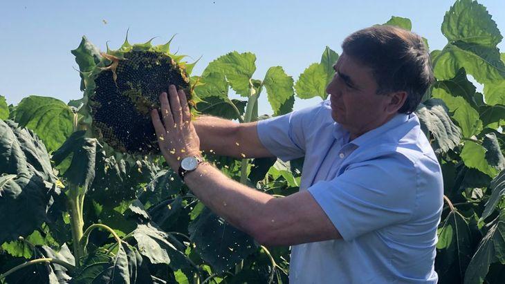 Урожай подсолнечника в Крыму соберут с 64 тысяч га
