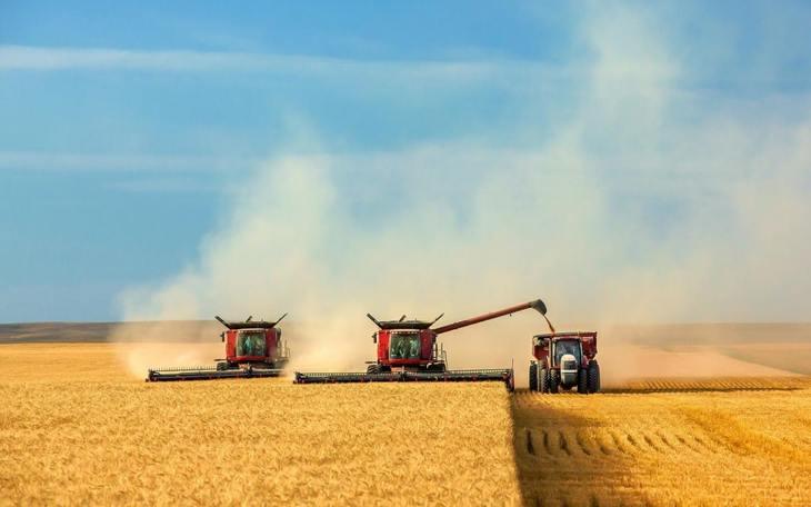 Порядка 4,5 млн тонн зерна с учетом кукурузы планирует собрать Курская область по итогам жатвы 2021