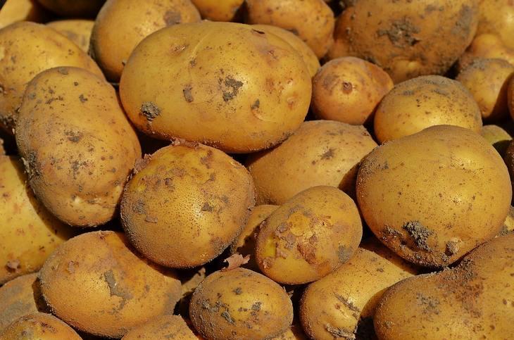 Корма для коров в Новой Зеландии будут делать из картофельных очистков
