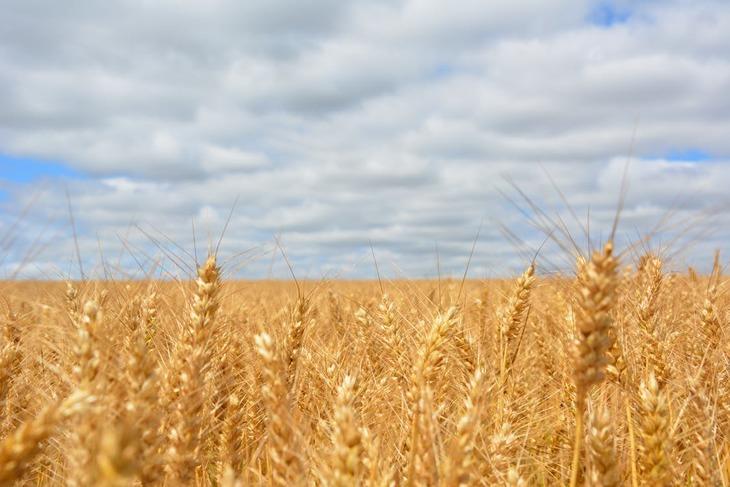 На 24% повысила закупочные цены на зерно НК «Продкорпорация» Казахстана по сравнению с 2020 годом