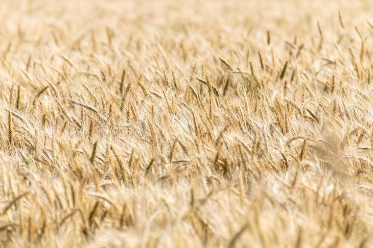 Китайские агрокомпании создали международную ассоциацию поставщиков зерновых продуктов
