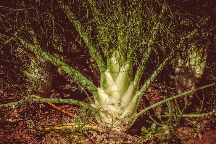 Растения для изготовления биоинсектицидов вошли в правительственный перечень сельхозкультур