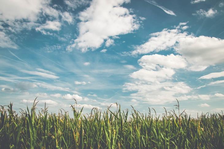 Китай готовится вступить в ГМО