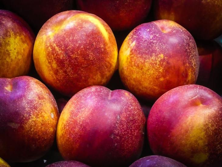 В азербайджанских нектаринах и абрикосах выявили опасный для растений патоген