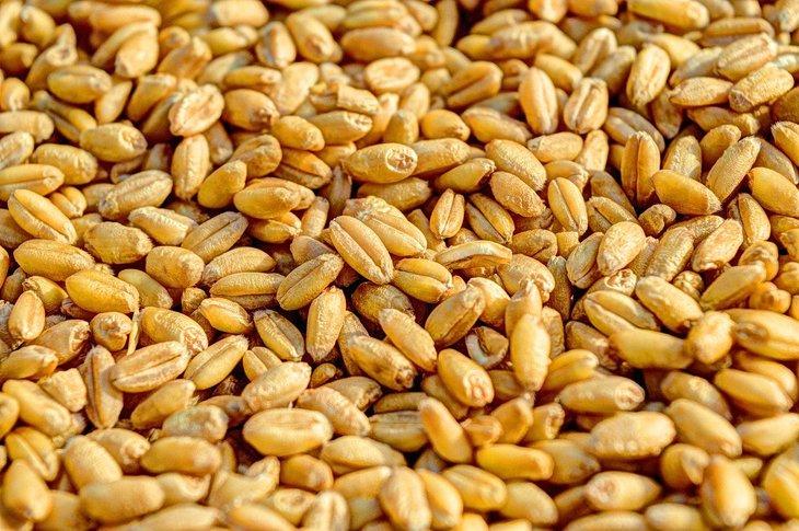 70 млн тонн пшеницы собрали в России на 10 сентября 2021