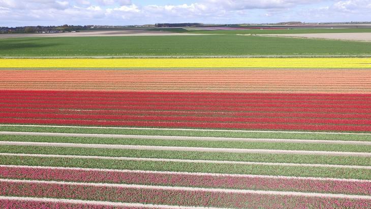 Азотный контроль сельхозземель привел к скандалу в Нидерландах