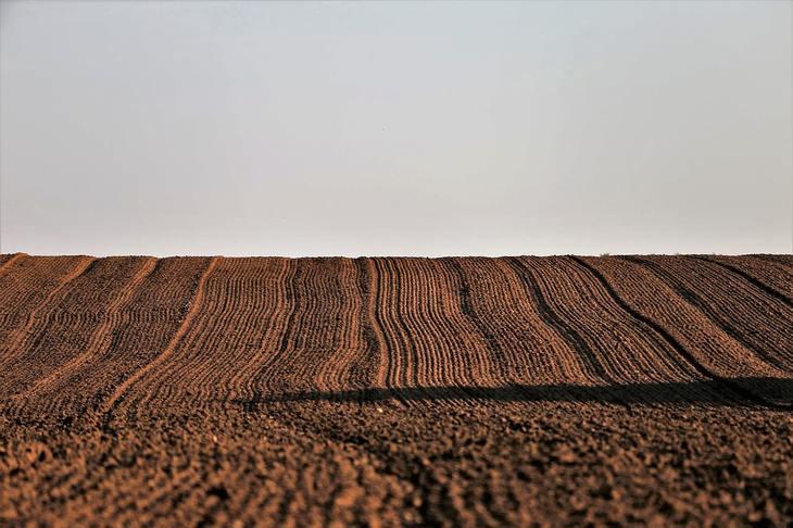 В России площадь под озимыми зерновыми и масличными в 2021 году составит 19,5 млн га
