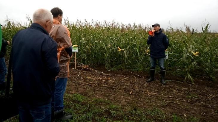 Во Владимирской области на Дне поля по кормовым культурам представили новинки селекции сои, рапса и кукурузы